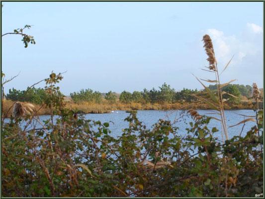 Végétation hivernale en bordure d'un réservoir, Sentier du Littoral, secteur Moulin de Cantarrane, Bassin d'Arcachon
