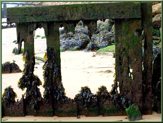 Quartier Chapelle Algérienne, ancien quai envahi de mousse et goémon sur la plage, village de L'Herbe, Bassin d'Arcachon (33)