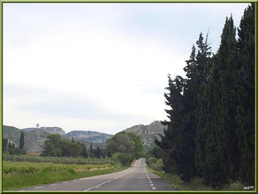 Route dans les Alpilles : cyprès, vignes et oliviers (Bouches du Rhône)