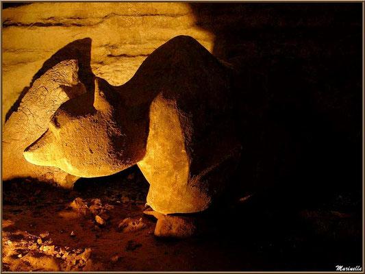 Les grottes de Sare : tête d'ours (Pays Basque français)