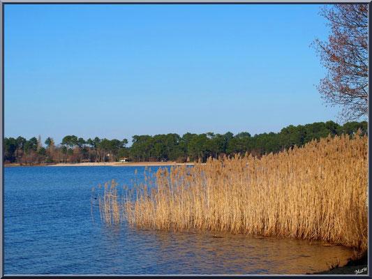 Lac de Sanguinet, roseaux, aulne et pins (Landes)