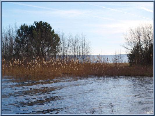 Petite presqu'île en bord de rive du Lac de Cazaux  (La Teste de Buch, Bassin d'Arcachon)