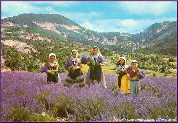 Cueilleurs de lavande (carte postale ancienne, collection privée)
