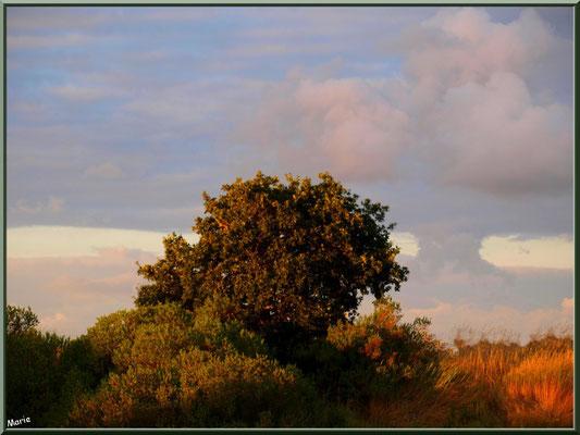 Dernier rayon du soleil sur les arbres du port