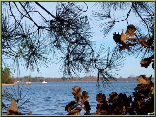 Derrière la végétation, le Lac de Cazaux (La Teste de Buch, Bassin d'Arcachon)