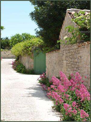 Ruelle fleurie à Talmont-sur-Gironde (Charente-Maritime)