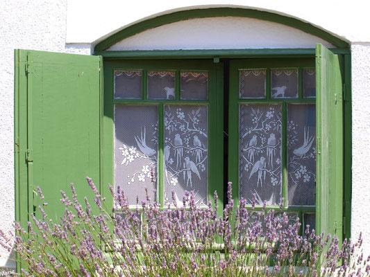 Fenêtre aux volets verts et aux lavandes à Talmont-sur-Gironde (Charente-Maritime)