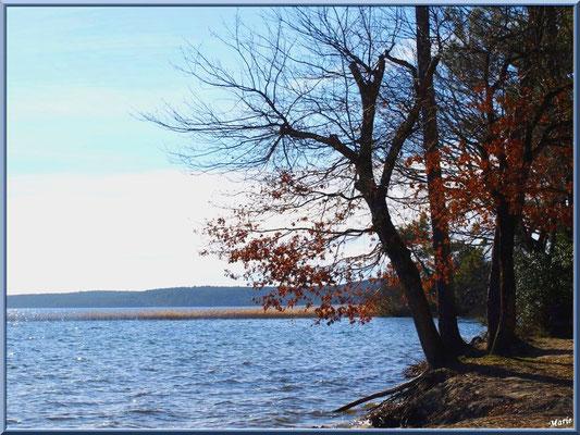 En bord de rive du Lac de Cazaux (La Teste de Buch, Bassin d'Arcachon)