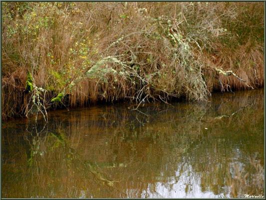 Reflets hivernaux dans un réservoir sur le Sentier du Littoral, secteur Moulin de Cantarrane, Bassin d'Arcachon