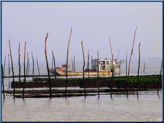 Un bateau d'ostréiculteur dans un parc à huîtres, village de L'Herbe, Bassin d'Arcachon (33)