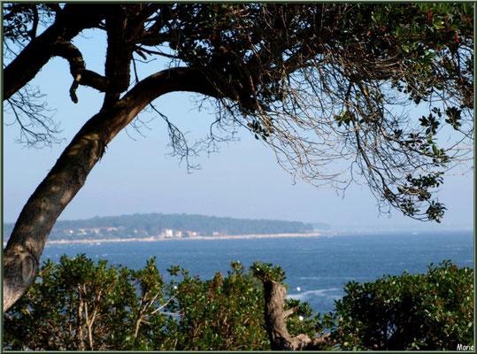 Le Bassin et le village de Piquey à l'horizon, village de L'Herbe, Bassin d'Arcachon (33)