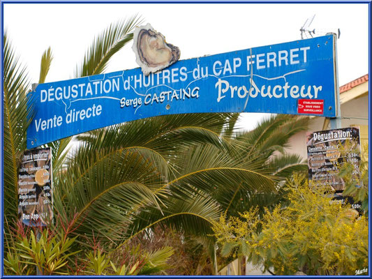Entrée d'une dégustation ostréicole, village de L'Herbe, Bassin d'Arcachon (33)