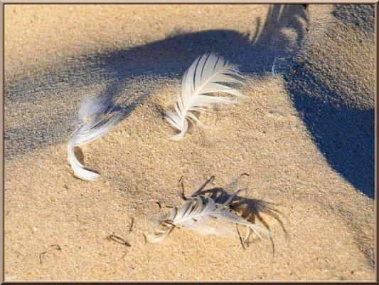 Plumes sur le sable