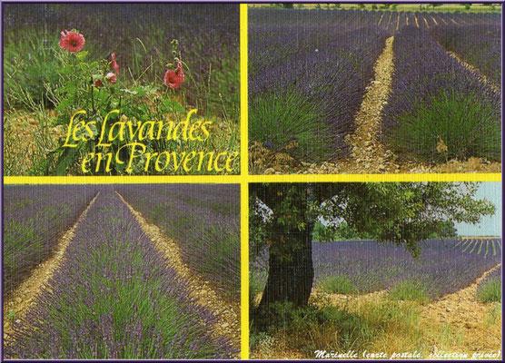 Les lavandes en Provence (carte postale, collection privée)
