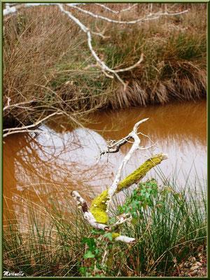 Branche et reflets sur un ruisseau, Sentier du Littoral secteur Pont Neuf, Le Teich, Bassin d'Arcachon (33)