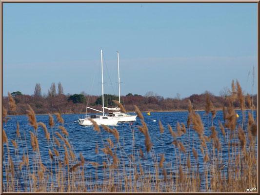 Voiliers sur le Lac de Cazaux (La Teste de Buch, Bassin d'Arcachon)