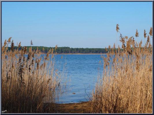 Allée entre les roseaux sur la rive du Lac de Sanguinet (Landes)