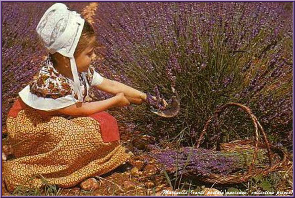 Petite cueilleuse de lavande (carte postale ancienne, collection privée)