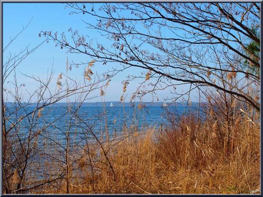Derrière la végétation, le Lac de Sanguinet (Landes)