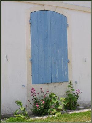 Fenêtre aux volets bleus fermés et valérianes à Talmont-sur-Gironde (Charente-Maritime)