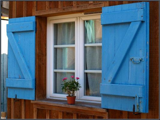Fenêtre aux volets bleus et pot de rosier, village de L'Herbe, Bassin d'Arcachon (33)