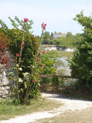 Ruelle fleurie avec vue sur La Gironde à Talmont-sur-Gironde (Charente-Maritime)