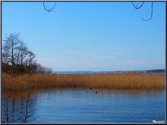 Lac de Sanguinet, roseaux et végétation diverse (Landes)