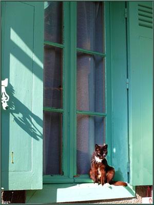 Chat à la fenêtre, village de L'Herbe, Bassin d'Arcachon (33)