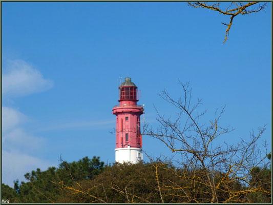 Le sommet du phare derrière les pins (Cap Ferret)