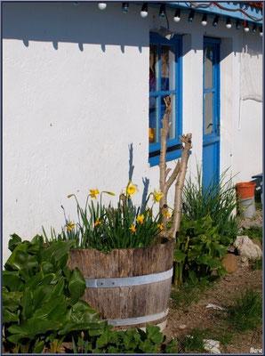 Cabane à la barrique aux jonquilles au port ostréicole d'Andernos-les-Bains (Bassin d'Arcachon)
