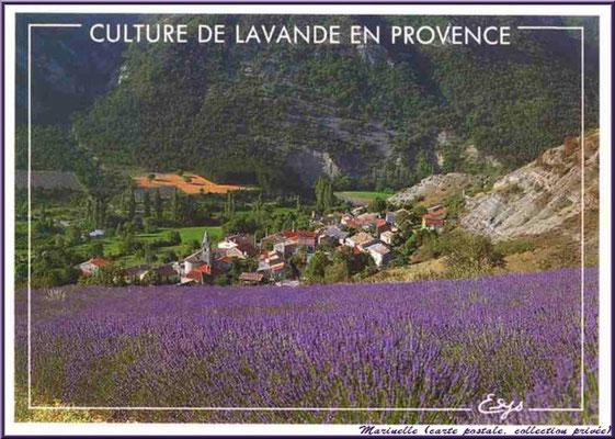 Champ de lavande et village (carte postale, collection privée)