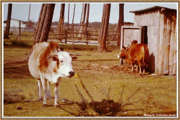 Gujan-Mestras autrefois : ancien Zoo de La Hume, Bassin d'Arcachon (Marinelle - Photo Alain Folliot, collection privée)