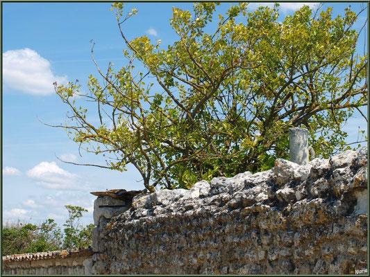 Vieux mur au détour d'une ruelle à Talmont-sur-Gironde (Charente-Maritime)