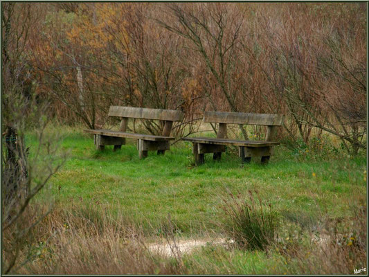 Parmi les tamaris, bancs pour le repos des promeneurs en bordure du Sentier du Littoral, secteur Moulin de Cantarrane, Bassin d'Arcachon
