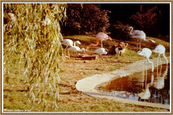 Gujan-Mestras autrefois : ancien Zoo de La Hume, Bassin d'Arcachon (Marinelle - Photo Alain Folliot, collection privée)