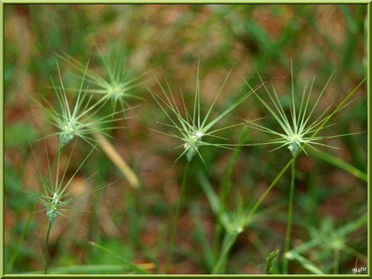 Herbacées comme des soleils