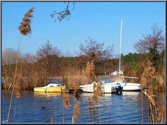Lac de Sanguinet, bateaux de plaisance, pins et roseaux (Landes)