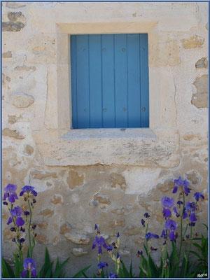 Petite fenêtre au volet bleu et aux iris à Talmont-sur-Gironde (Charente-Maritime)
