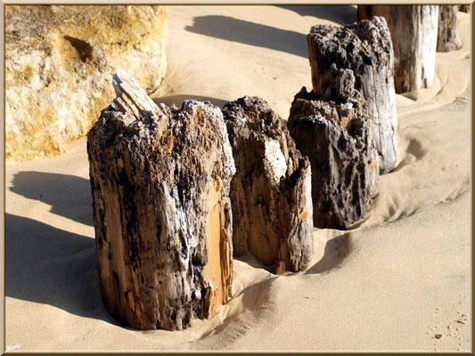 """Vieux piquets sur la plage de """"La Pointe"""" au Cap Ferret"""