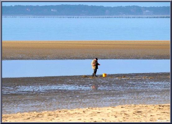 Pêcheur de coquillages au large de la plage Péreire à Arcachon, Bassin d'Arcachon (33)