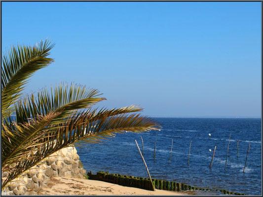 Palmier, sable fin et le Bassin d'Arcachon, village de L'Herbe, Bassin d'Arcachon (33)