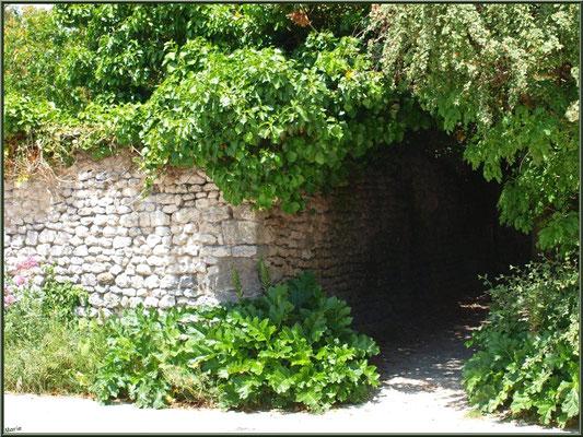 Ruelle verdoyante à Talmont-sur-Gironde (Charente-Maritime)