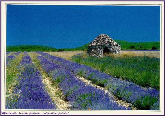 Borie dans un champ de lavande (carte postale, collection privée)