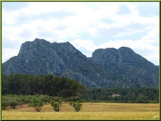 Les Alpilles avec en contrebas pins, oliviers et mas  (Bouches du Rhône)