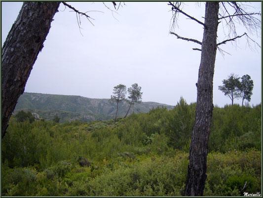Pinède et garrigue au massif de La Caume dans les Alpilles (Bouches du Rhône)