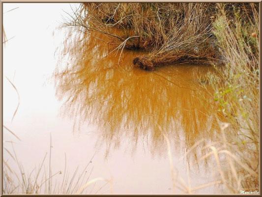 Végétation et reflets sur un ruisseau, Sentier du Littoral secteur Pont Neuf, Le Teich, Bassin d'Arcachon (33)