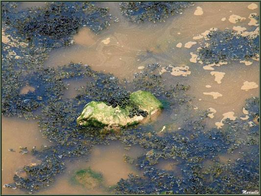 Pierre et goémon en bordure de La Gironde à Talmont-sur-Gironde (Charente-Maritime)