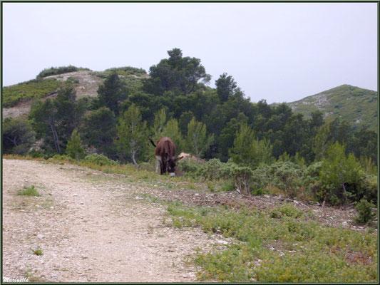 Petit âne dans la garrigue des Alpilles au massif de La Caume (Bouches du Rhône)