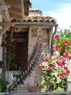 Maison aux valérianes dans une ruelle à Talmont-sur-Gironde (Charente-Maritime)