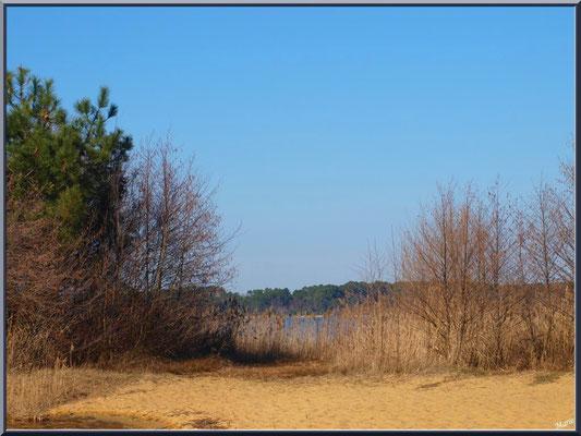 Lac de Sanguinet : îlot sur le lac (Landes)
